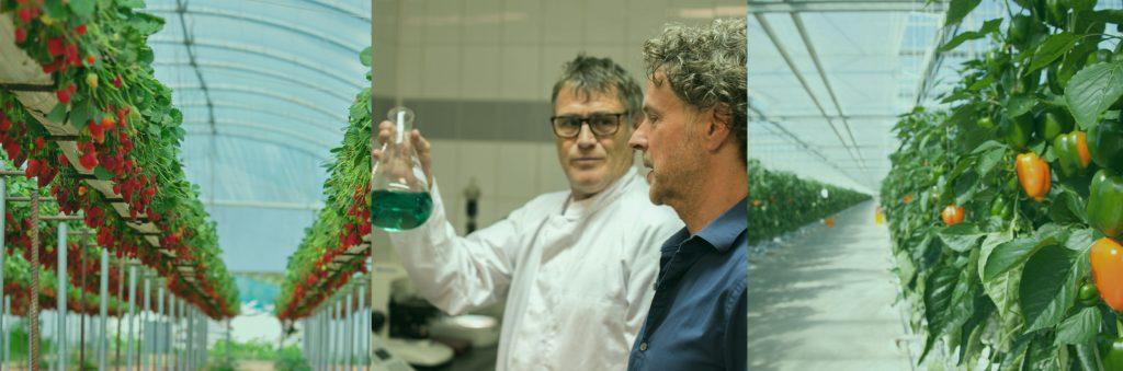 Bio Nova Veganics Dünger Paprika im Gewaechshaus